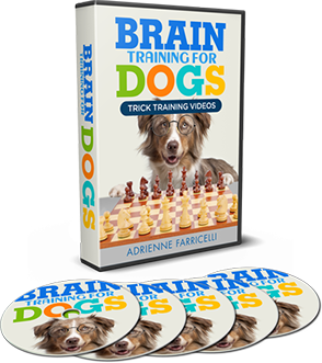 Supercharge Deals Brain Training For Dogs Review dog training dog intelligence dog brain training